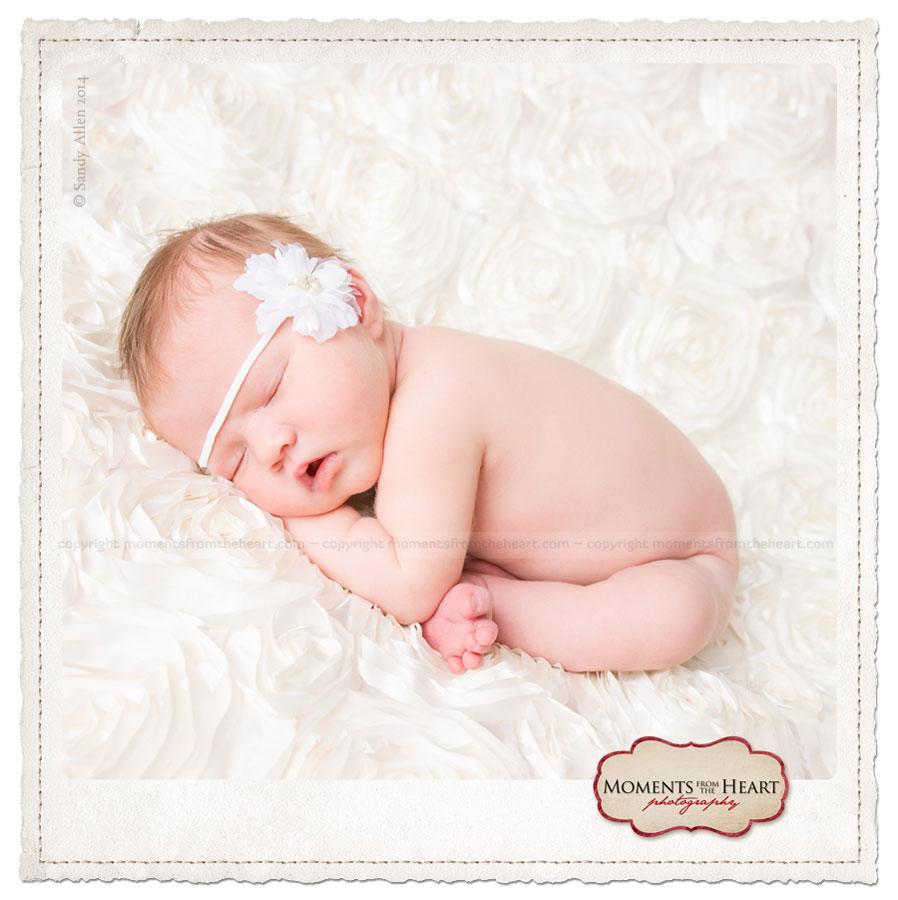 austin newborn session