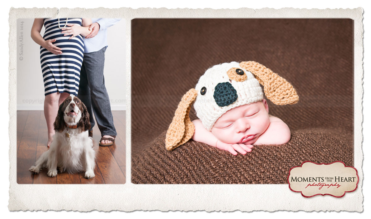 newborn photos  new puppy