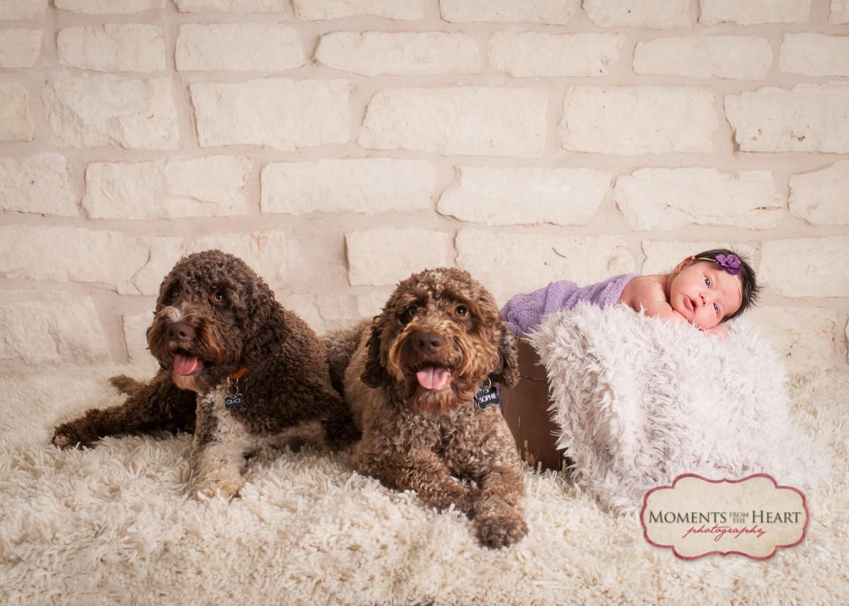 pets newborn